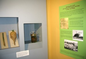 An exhibit panel on 19th -century farming and cases with wax vegetables on display.