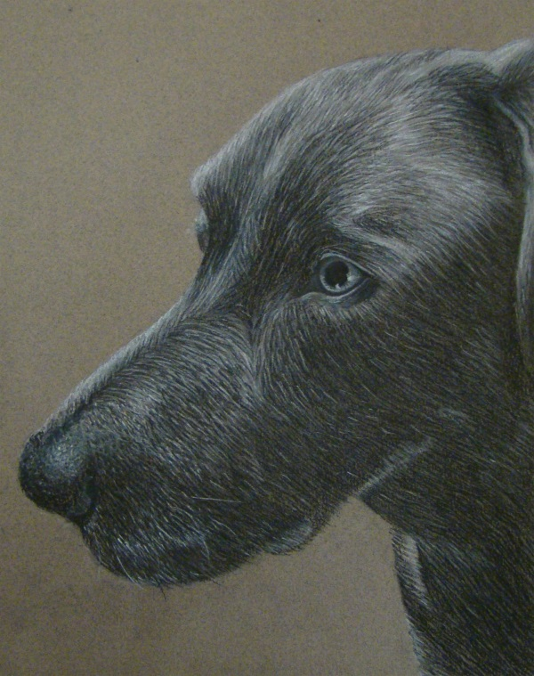 charcoal-drawing-of-a-black-dogs-head
