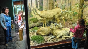 Colored photograph of a diorama with three deer