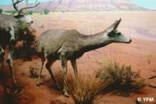 Colored photograph of a plateau diorama with two deer