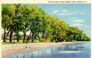 willows along a lake