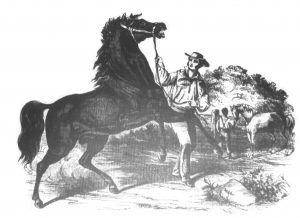 man with a horse