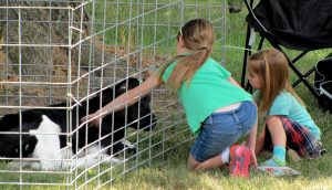 Two little girls kneeling in front of a calf