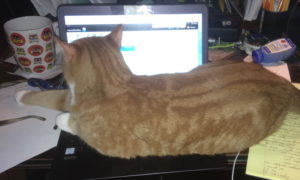 Orange Cat Sitting On Laptop Computer