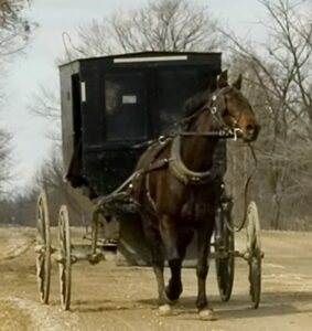 Horse pulling a Mennonite buggy.